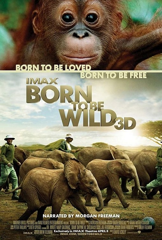 Born to Be Wild poster, copyright in handen van productiestudio en/of distributeur