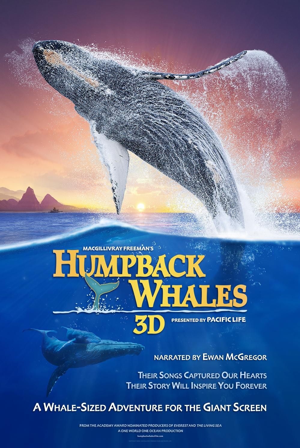 Humpback Whales poster, copyright in handen van productiestudio en/of distributeur