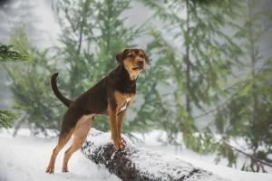 A Dog's Way Home filmstill