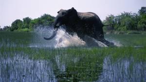 African Safari filmstill