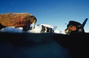 Still: Arctic Tale