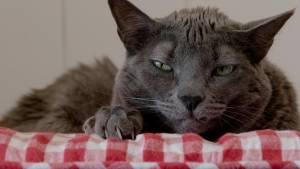 Cat Stories filmstill