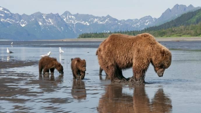 Bears filmstill