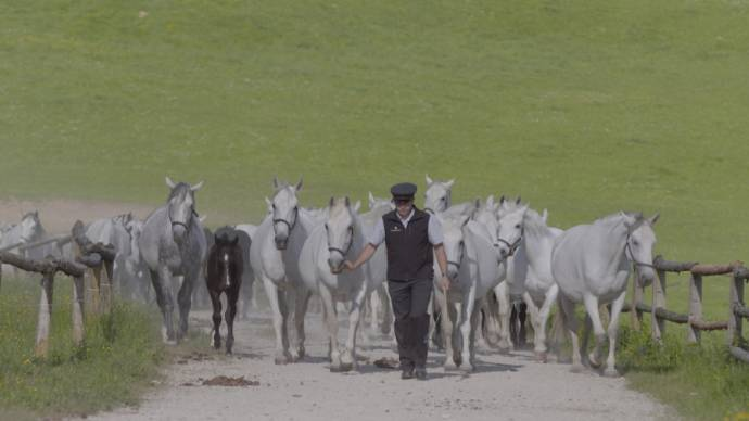 The Perfect Horse filmstill