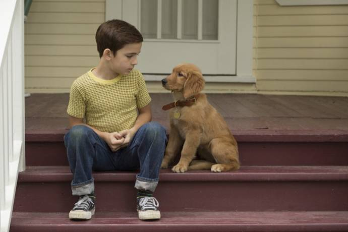 A Dog's Purpose filmstill