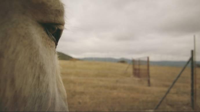 Donkeyote filmstill