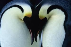 March of the Penguins filmstill