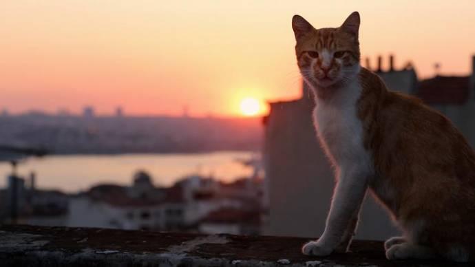 Kedi filmstill