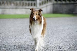 Lassie (2005) filmstill