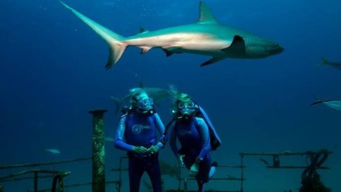 Jean-Michel Cousteau (Jean-Michel Cousteau) en Celine Cousteau (Celine Cousteau)