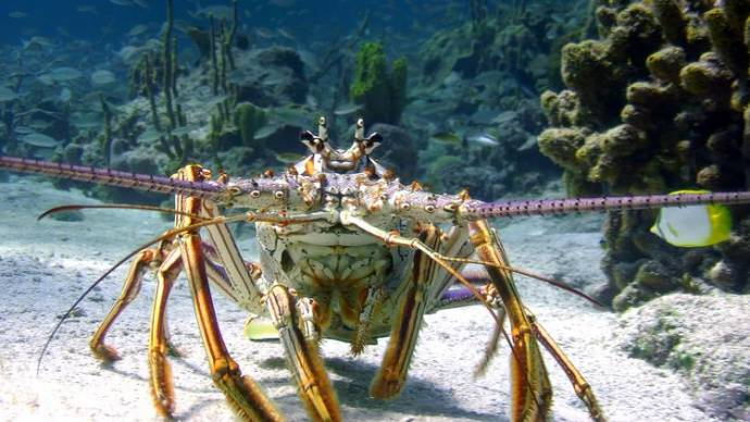 Wonders of the Sea 3D filmstill