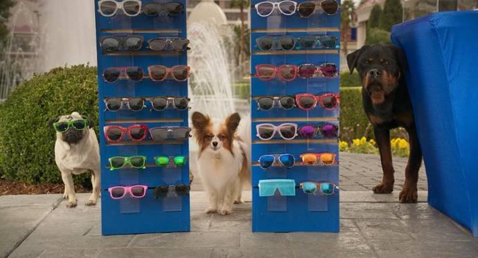 Show Dogs filmstill