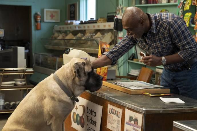 A Dog's Journey filmstill
