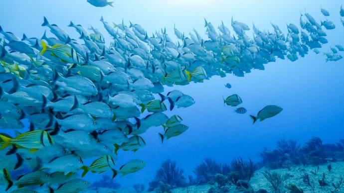 An Ocean Story filmstill