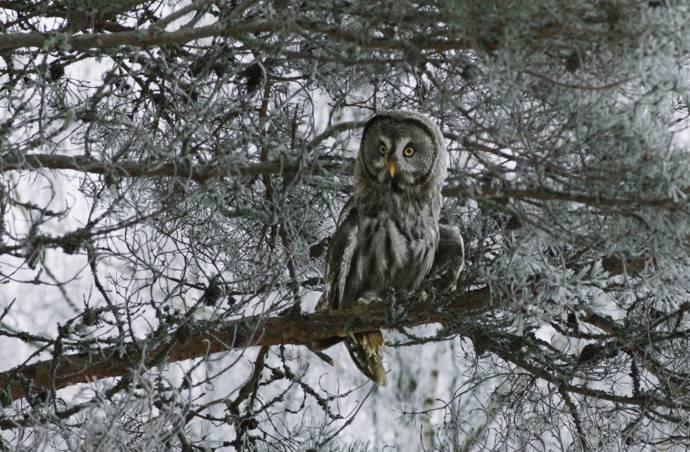 Phantom Owl Forest filmstill