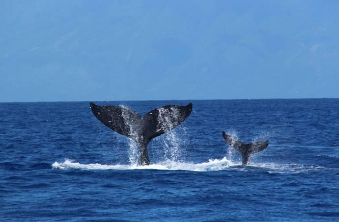 Humpback Whales filmstill