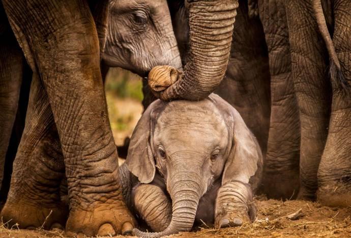Elephants upclose filmstill