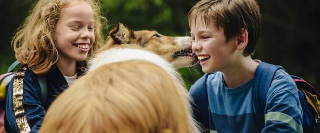 Lassie (NL)