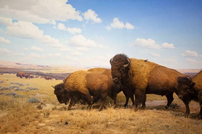 Yellowstone filmstill