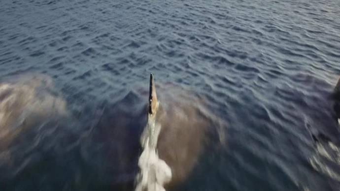 Deep Blue Sea 3 filmstill