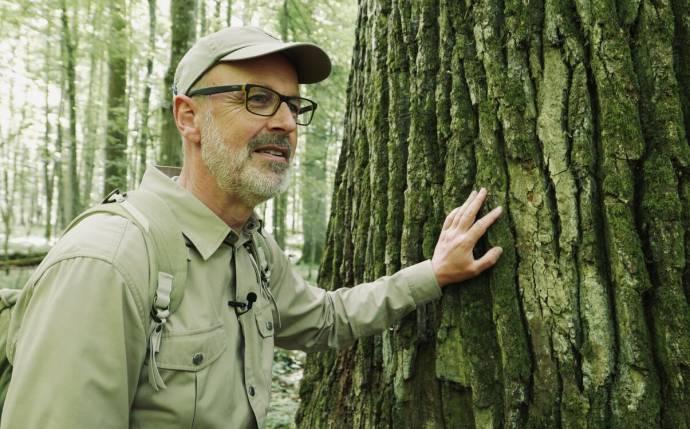 The Hidden Life of Trees filmstill
