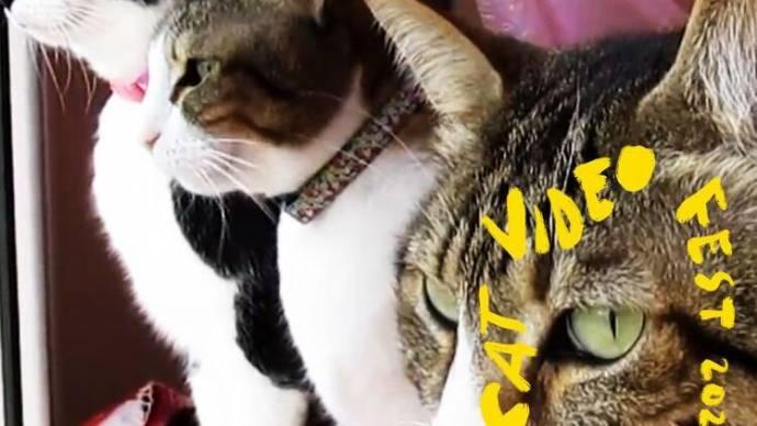 CatVideoFest 2021 filmstill