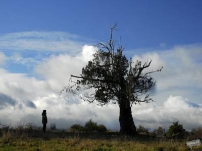 El cielo, la tierra, y la lluvia