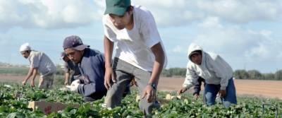 Plantagewerkers