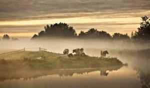 Holland, natuur in de delta filmstill