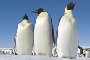 March of the Penguins 2 filmstill