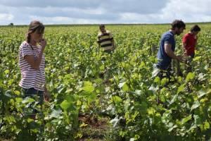 Retour en Bourgogne filmstill