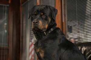Show Dogs (NL) filmstill