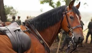 War Horse filmstill