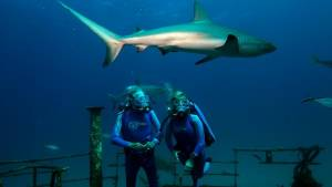 Wonders of the Sea 3D: Jean-Michel Cousteau (Jean-Michel Cousteau) en Celine Cousteau (Celine Cousteau)
