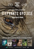 Elephants upclose poster