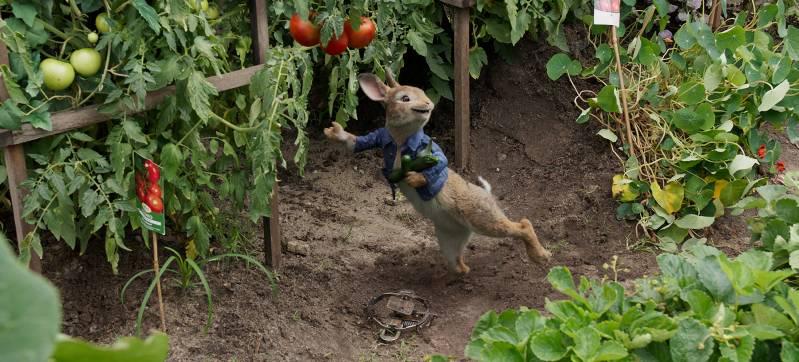 Pieter leeft zich uit in de groentetuin.