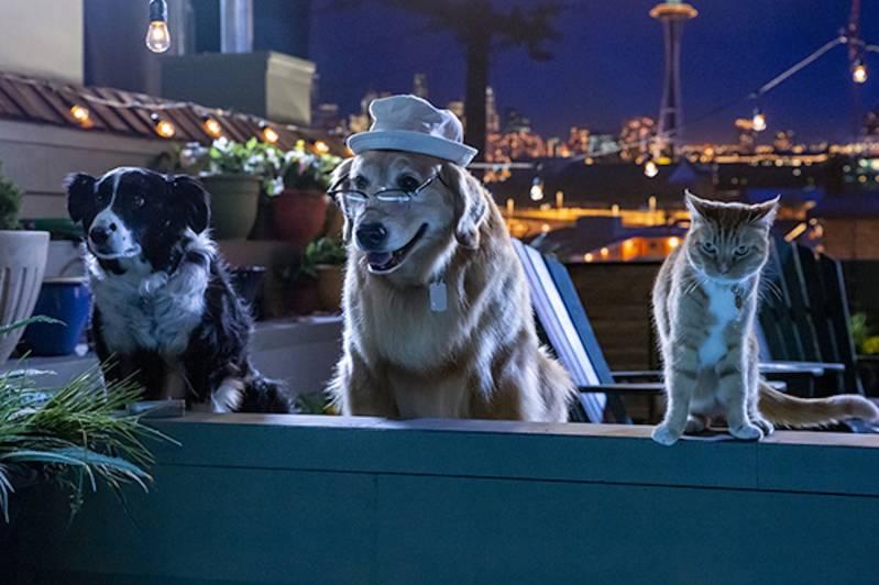 NL Stemmencast CATS & DOGS bekend